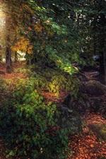 iPhone fondos de pantalla Árboles, hojas, bosque, otoño, camino