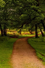 Preview iPhone wallpaper Trees, path, grass, green, UK, Peak District National Park