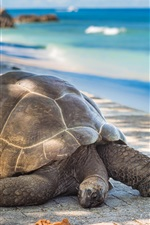 Preview iPhone wallpaper Turtle, sea, coast