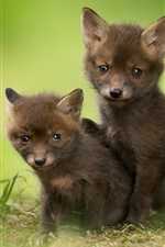 Preview iPhone wallpaper Two cute fox cubs