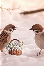 Preview iPhone wallpaper Two sparrows, snow, flowers