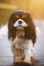 Preview iPhone wallpaper Wet dog, wood bridge, snow, sunshine
