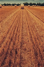 Preview iPhone wallpaper Wheat field, hay