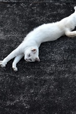 Preview iPhone wallpaper White cat lying on ground
