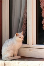 Preview iPhone wallpaper White kitten sit on windowsill