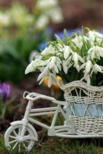 Preview iPhone wallpaper White snowdrops, toy bike