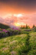 Wildflowers, grass, clouds, sunrise, fog