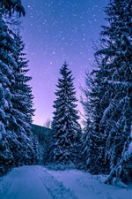 Preview iPhone wallpaper Winter, forest, trees, snow, starry