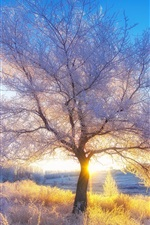 Preview iPhone wallpaper Winter, snow, trees, sun rays, morning