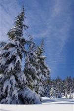 iPhone fondos de pantalla Invierno, árboles, nieve, frío