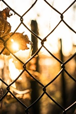 Preview iPhone wallpaper Wire fence, leaf, sun rays