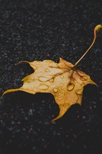 Preview iPhone wallpaper Yellow dry maple leaf, water drops