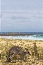 미리보기 iPhone 배경 화면 호주, 캥거루, 잔디, 바다