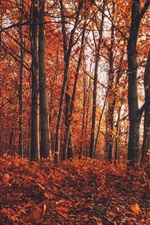 Preview iPhone wallpaper Autumn, forest, trees, red leaves ground