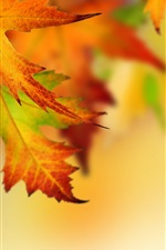 Preview iPhone wallpaper Autumn, maple leaves, blurry background