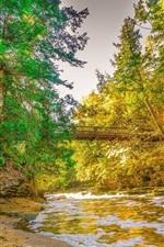 秋、川、橋、木々、自然の風景