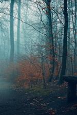 Осень, деревья, туман, скамейка, путь, парк