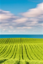Preview iPhone wallpaper Baltic sea, spring in May, green fields