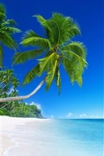 Preview iPhone wallpaper Beautiful beach, tropical paradise, palm trees, blue sea