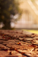 Preview iPhone wallpaper Bench, leaves, autumn