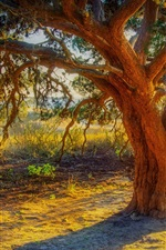 Preview iPhone wallpaper Big tree, trunk, grass, river, sun rays