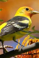 iPhone fondos de pantalla Pájaro, pico, cola, árbol, flores