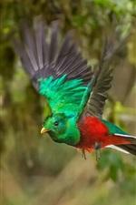 Preview iPhone wallpaper Bird flight, forest, Costa Rica