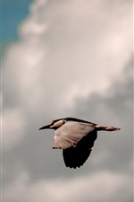 Preview iPhone wallpaper Bird flight, sky, clouds