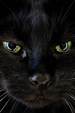 Preview iPhone wallpaper Black cat face, green eyes