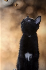 Preview iPhone wallpaper Black kitten look at butterfly, stump