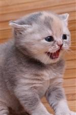 Preview iPhone wallpaper British Shorthair, cute kitten