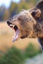 iPhone fondos de pantalla Sonrisa de oso pardo, boca