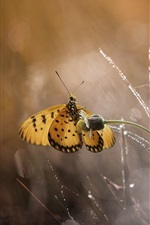 Butterfly, grass, water drops