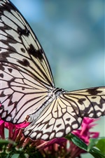 Preview iPhone wallpaper Butterfly, little flowers, blue background
