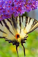 Preview iPhone wallpaper Butterfly, purple little flowers
