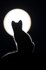 Preview iPhone wallpaper Cat silhouette, night, moon, darkness