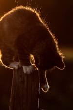 Preview iPhone wallpaper Cat sit on fence, sunset