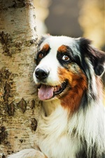 Preview iPhone wallpaper Cute dog hug a tree