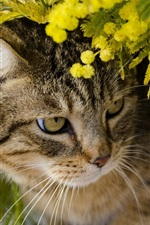 Cute kitten hidden in the flowers