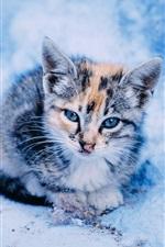 Cute kitten in the snow, winter