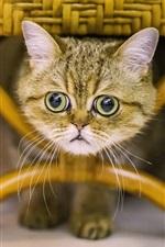 Preview iPhone wallpaper Cute kitten under chair, face