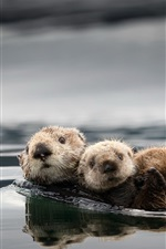 Preview iPhone wallpaper Cute otters, water