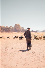 Preview iPhone wallpaper Desert, goats, grass, person