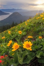 Preview iPhone wallpaper Dog Mountain, yellow flowers, slope, Cascade Range, Columbia River, USA