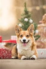 iPhone обои Собака, вид спереди, подарки
