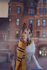 Preview iPhone wallpaper Dog, scarf, book, funny animals