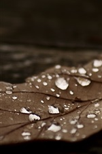 Preview iPhone wallpaper Dry leaf, water drops