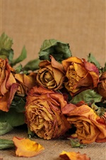 Preview iPhone wallpaper Dry roses, flowers, still life