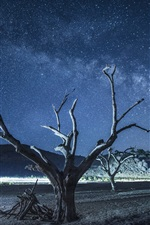 Preview iPhone wallpaper Dry trees, starry, night
