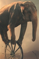 Preview iPhone wallpaper Elephant play wheel